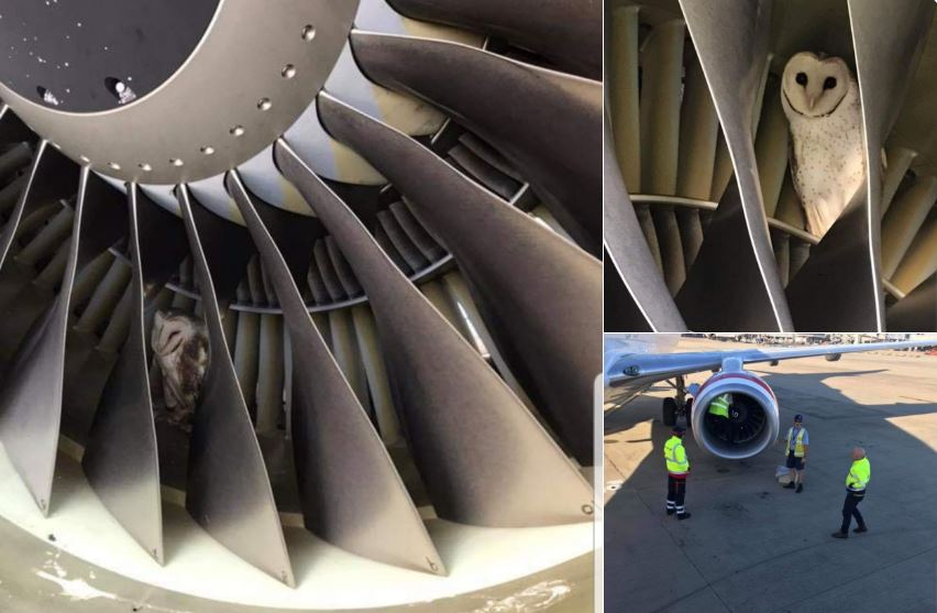 OWL FOUND IN B737 ENGINE DURING PRE-FLIGHT CHECK AT MELBOURNE AIRPORT